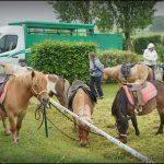 dsu01985r-fb-poneys